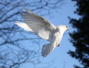 doves_8_by_tasastock