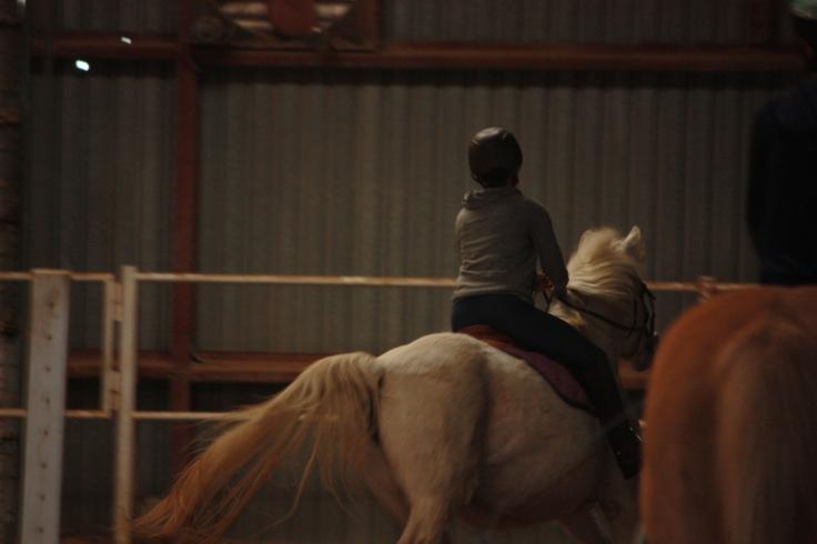 Horses 2016 212