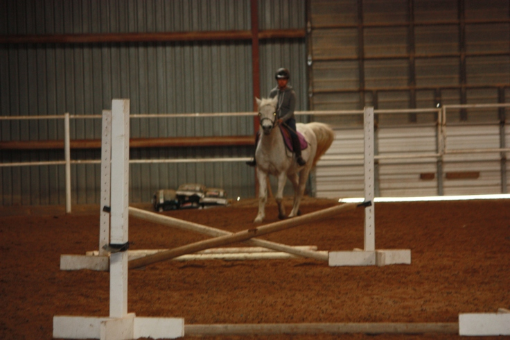Horses 2016 217