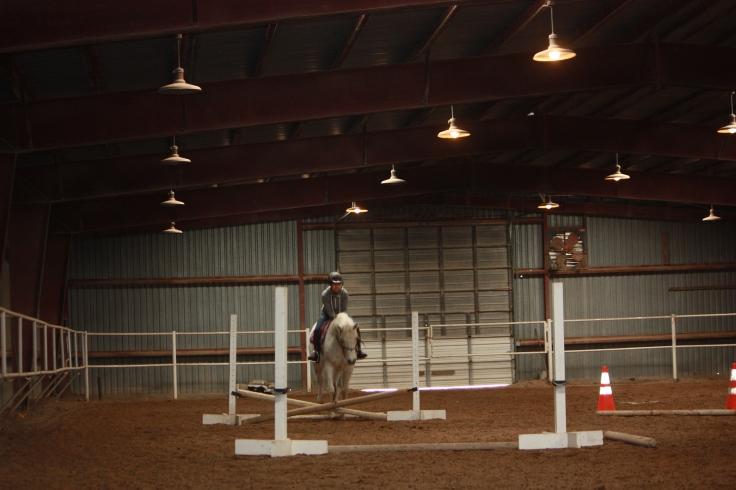 Horses 2016 227